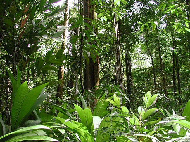 Pearson Rainforest Reserve | Children's Tropical Forests